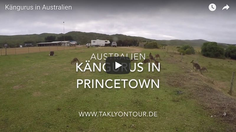 Video von Kängurus in Australien