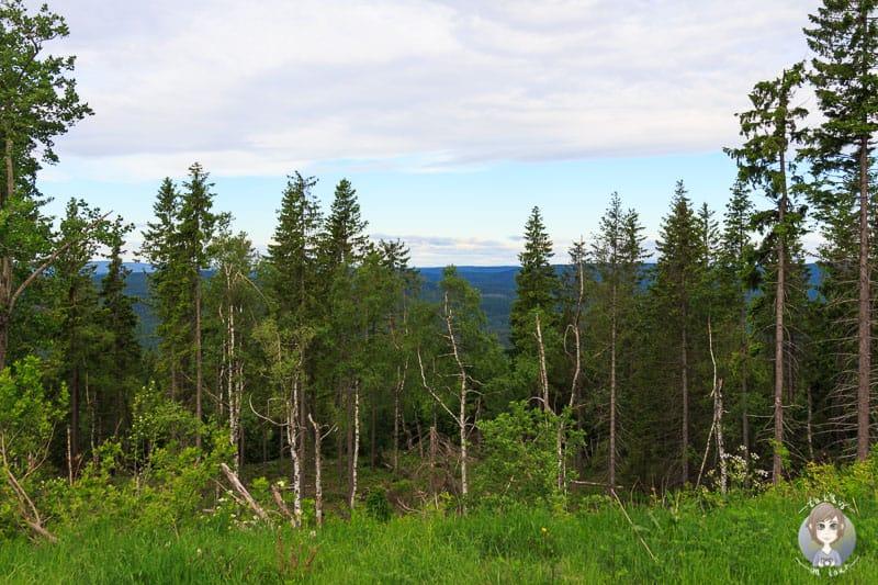 Spaziergang durch die Natur in Oslo