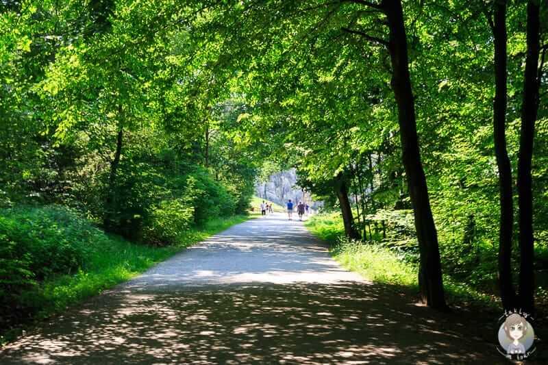 Gang durch den Wald zum Kulturdenkmal Externsteine