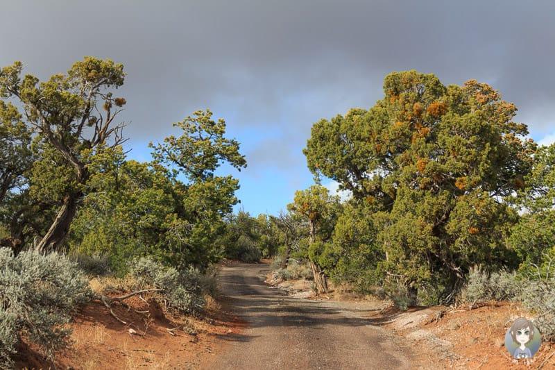 Anfahrt zum Canyon View Campground