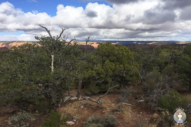 Aussicht vom Canyon View Campground