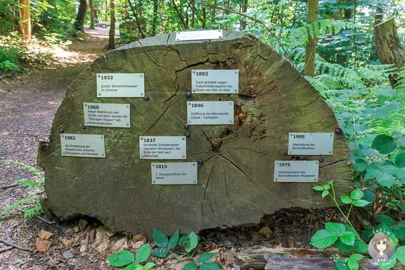 Bedeutung der Baumringe auf dem Holzweg