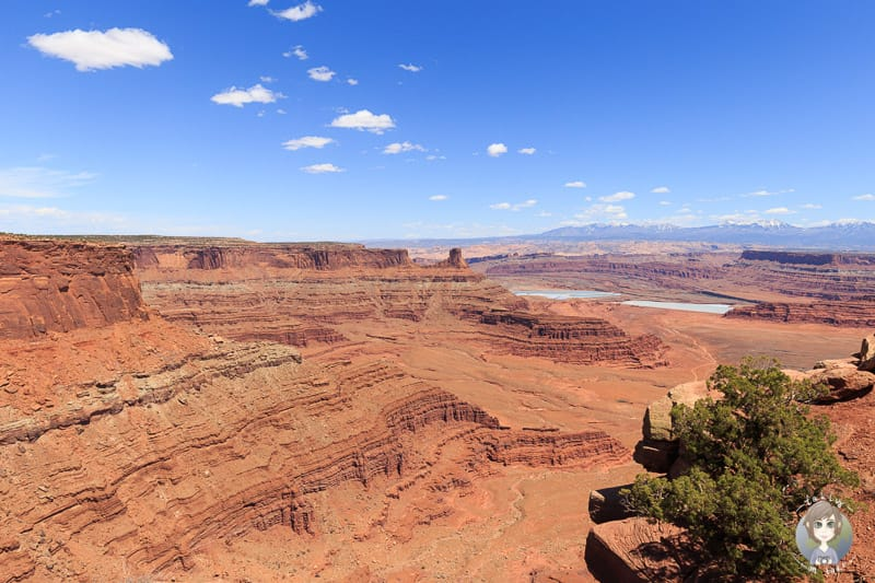 Aussicht vom Dead Horse Point Overlook