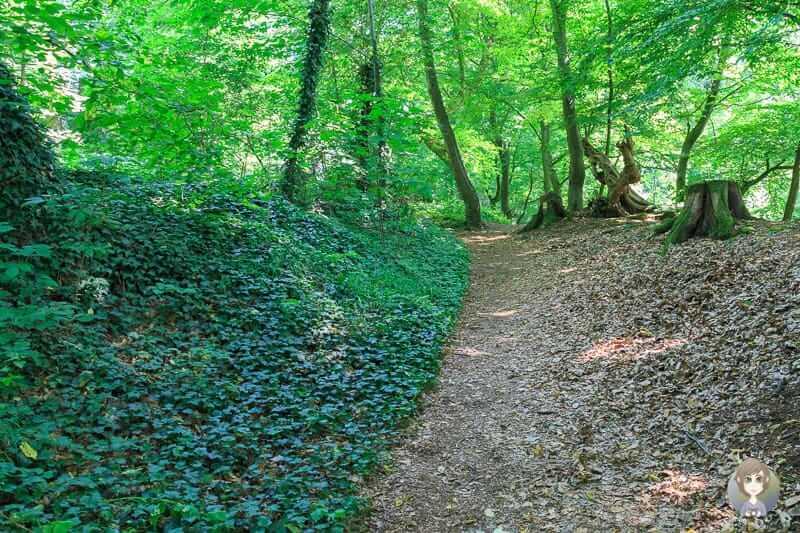 Wanderung über den Holzweg an den Hannoversche Klippen