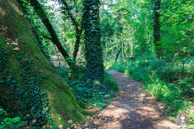 Wanderung durch den Wald im Naturschutzgebiet Hannoversche Klippen