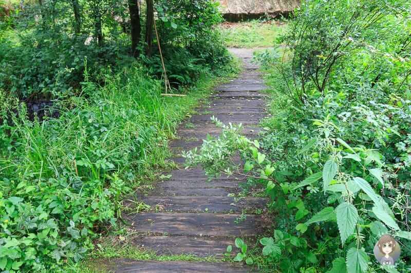 Ein Moorbohlenweg aus der Bronzezeit