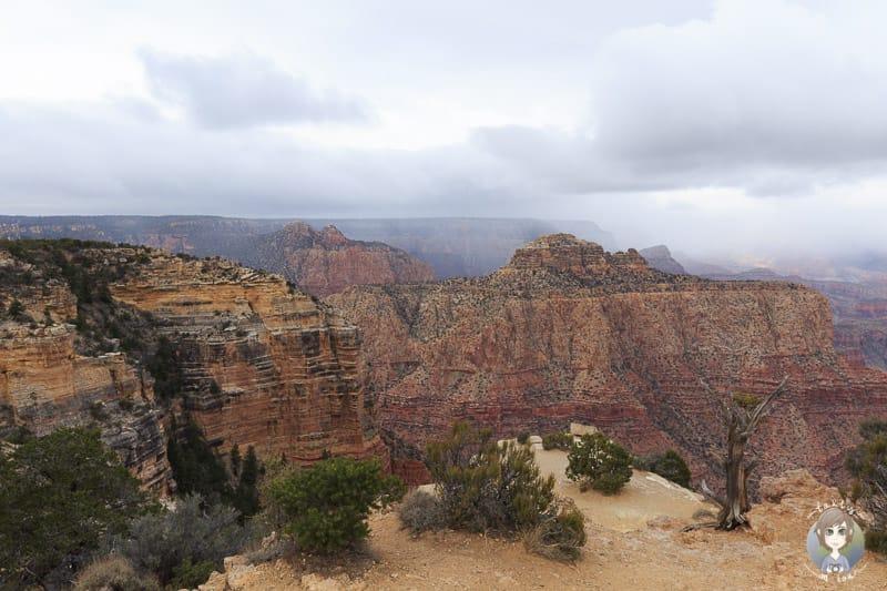 Aussicht vom Moran Point im Grand Canyon National Park