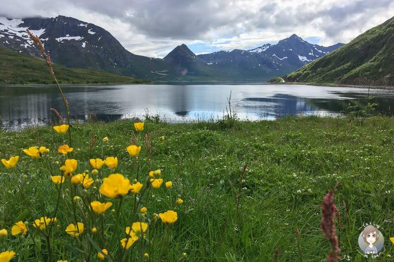 Ein traumhafter Blick auf einen Fjord in Norwegen