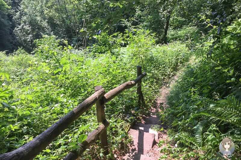 Der Klippensteig im Naturschutzgebiet Hannoversche Klippen