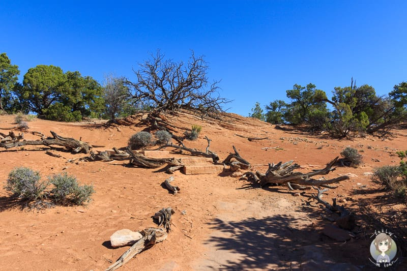 Rueckweg der Wanderung Mesa Arch im Canyonlands National Park