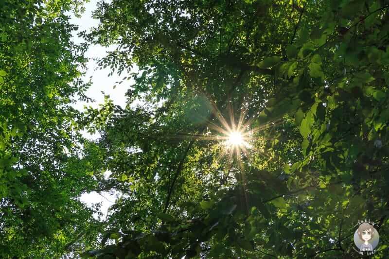 Sonnenstrahlen im Wald auf der Wanderung im Weserbergland