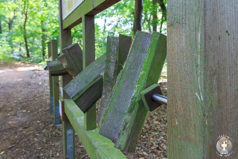 Den Wald erkunden auf dem Weg zum Weser Skywalk