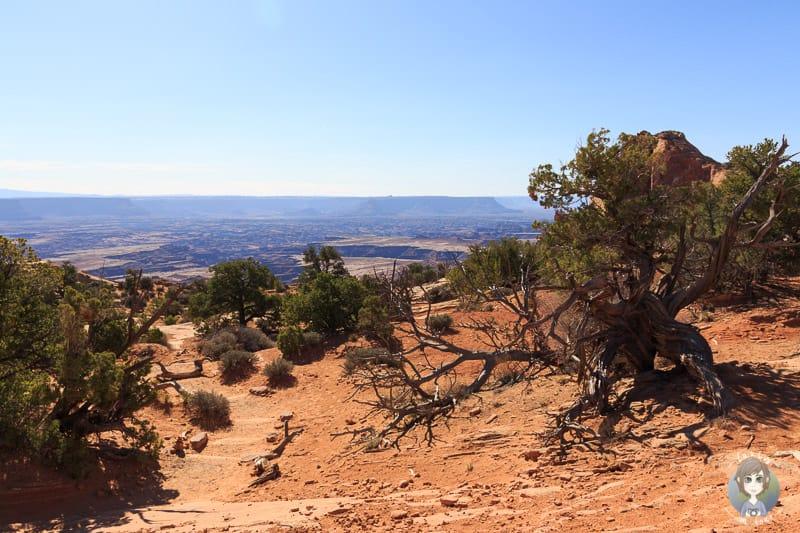 Der Wanderweg zum Mesa Arch