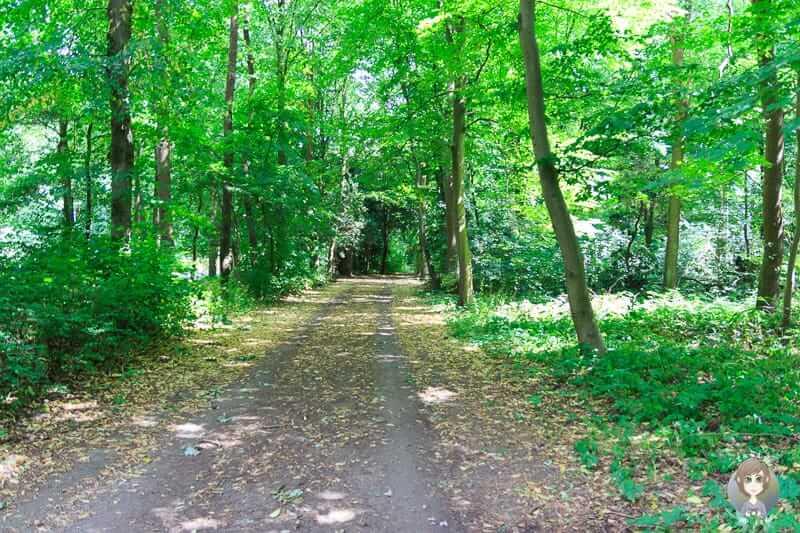 Spaziergang durch die Eilenriede in Hannover