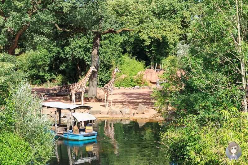 Ein tolles Erlebnis im Zoo Hannover
