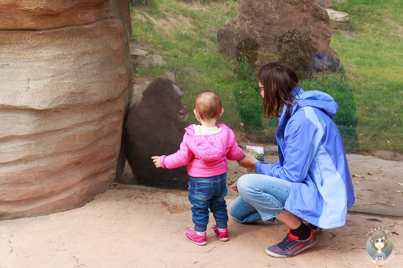 Erlebnis Zoo Hannover mit Kind