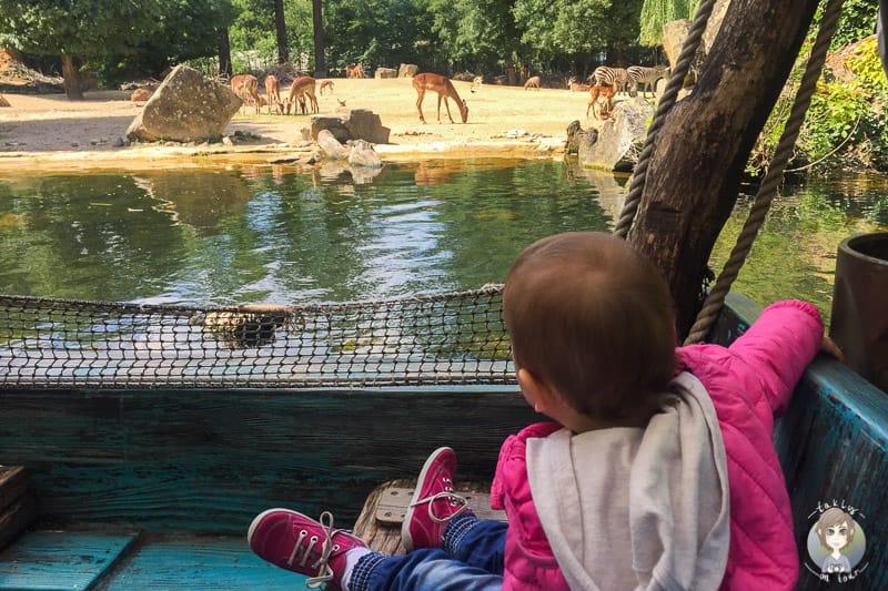 Ein Ausflug im Zoo Hannover mit Kind