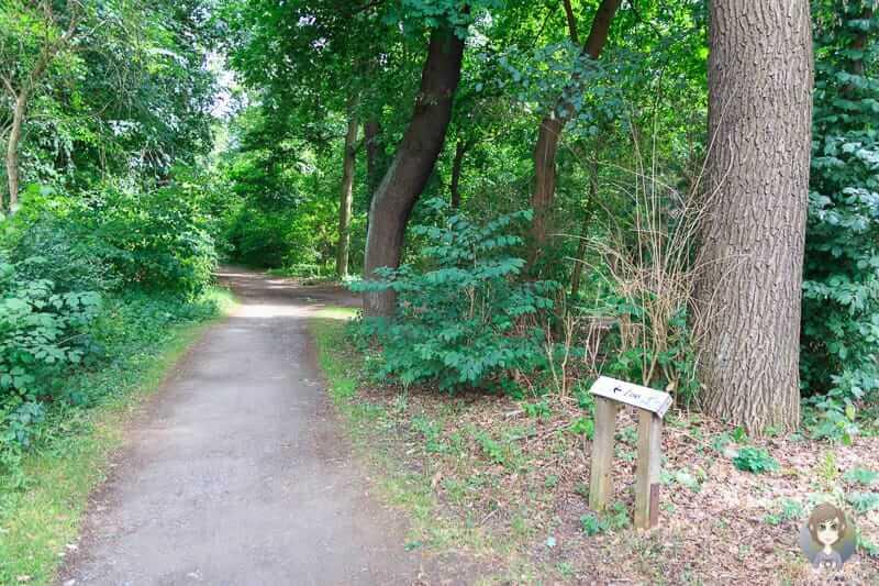 Der Stadtwald Eilenriede in Hannover