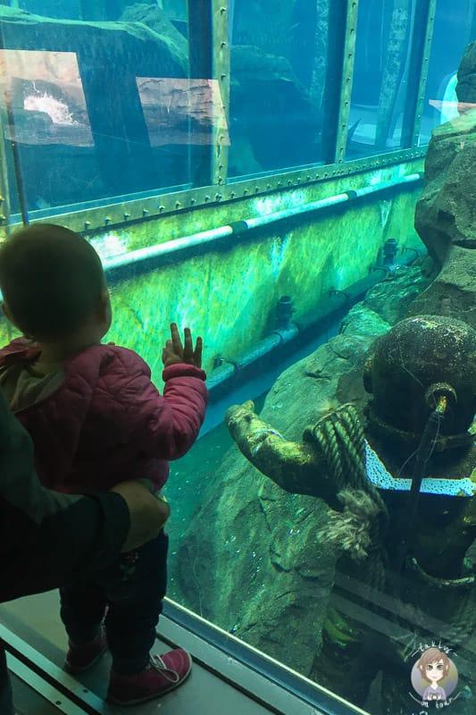 Eine Unterwasserwelt im Zoo Hannover