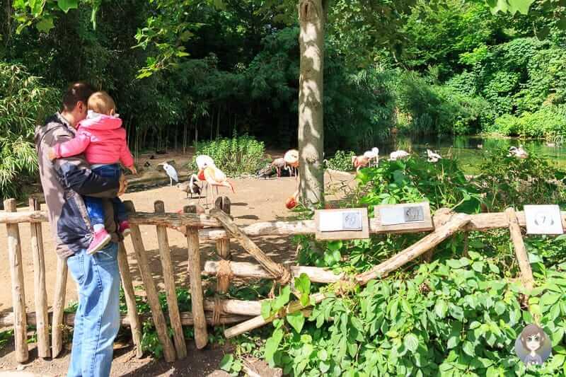 Mit Kind im Erlebnis Zoo Hannover