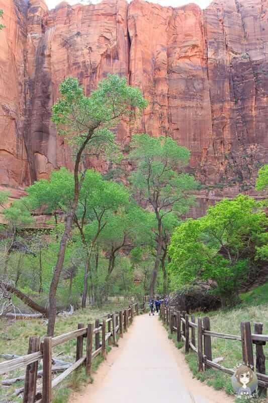 Ein barrierefreier Trail im Zion National Park