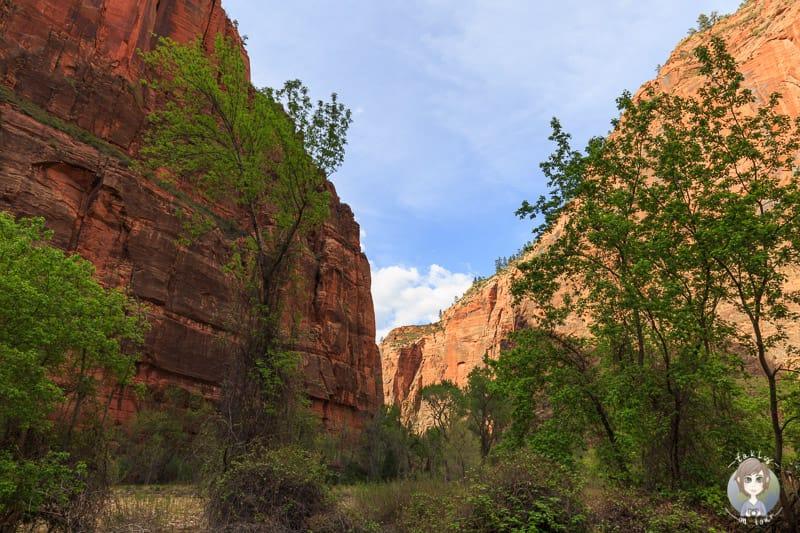 Fantastische Aussichten im Zion National Park