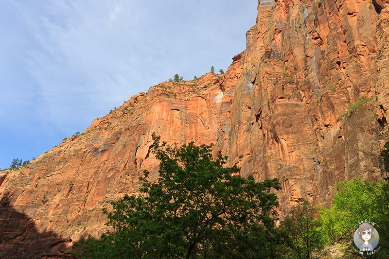 Glühende Felsen im Zion National Park