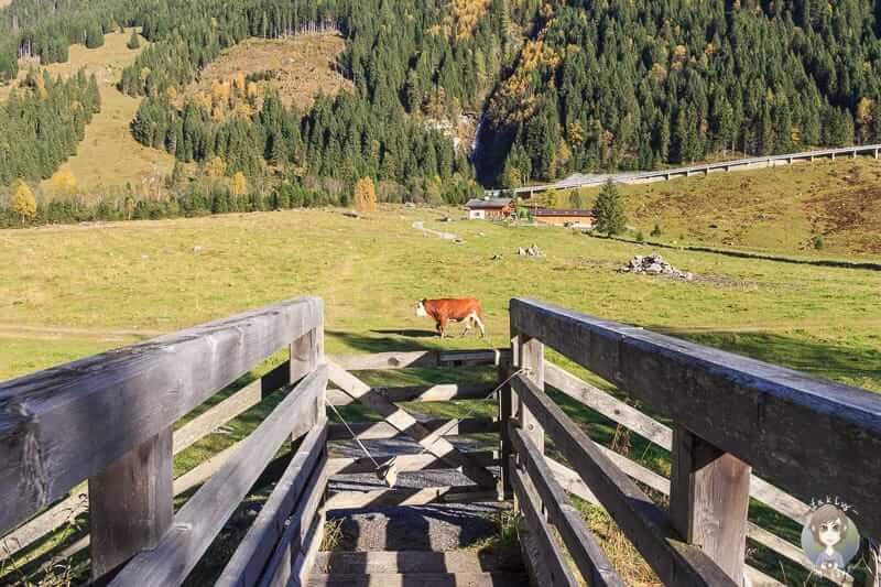 Eine Holzbrücke in Ferleiten