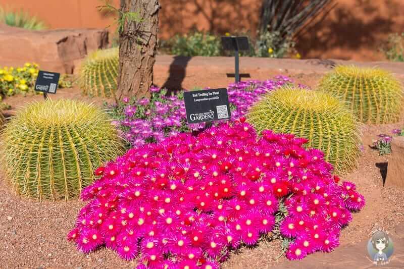 Farbenfrohe Pflanzen im Red Hills Desert Garden Park in St. George