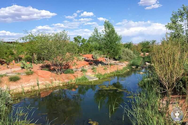 Ein Teich im Red Hills Desert Garden Park