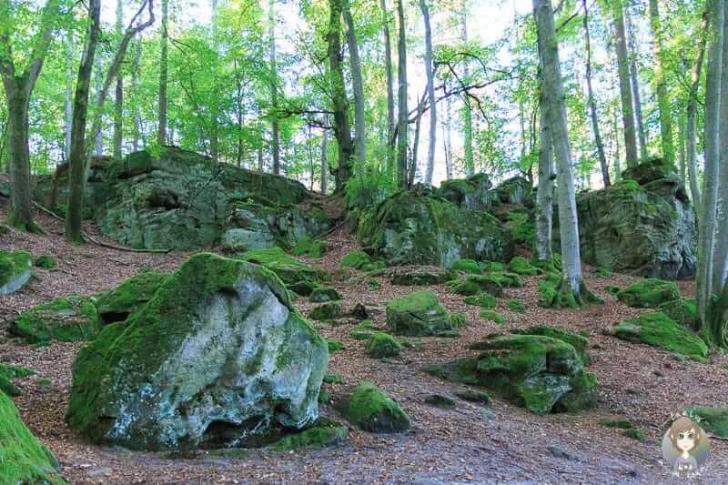 Felsen im Wald an der Teufelsschlucht