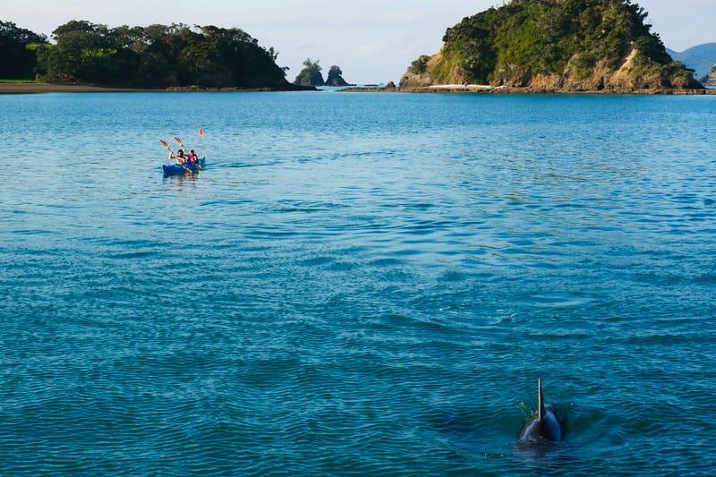 Blick auf Delfine Ausflüge in Neuseeland sind teuer