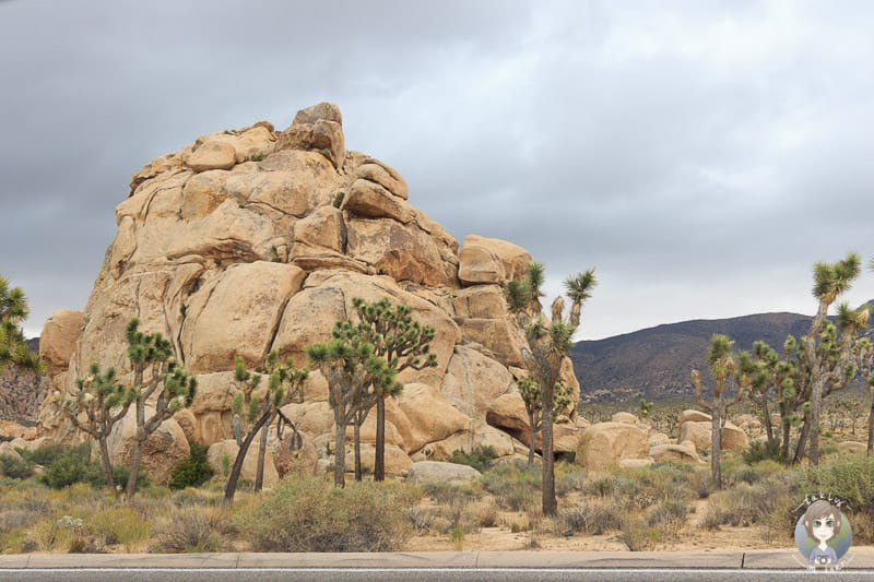 Felsformation im Joshua Tree National Park