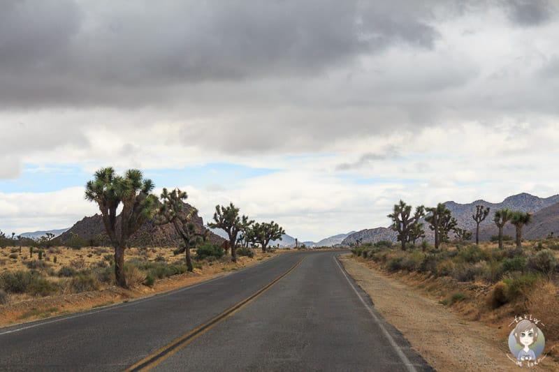 Fahrt durch den Joshua Tree National Park
