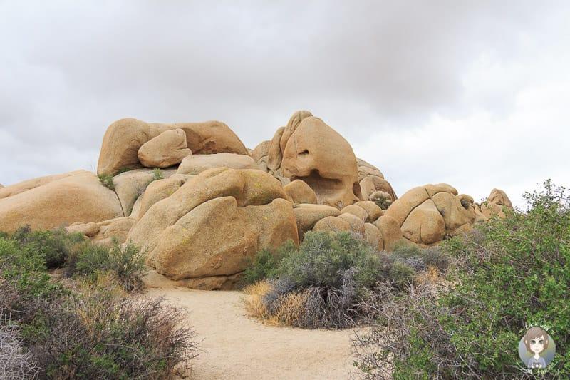 Die beeindruckenden Jumbo Rocks im Joshua tree National Park