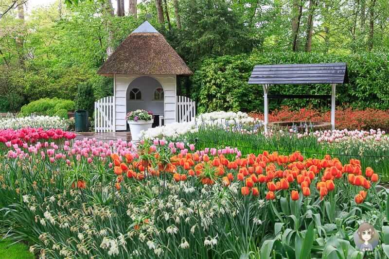 Ein kleines Häuschen zwischen Tulpen im Keukenhof dem Tulpengarten in Holland