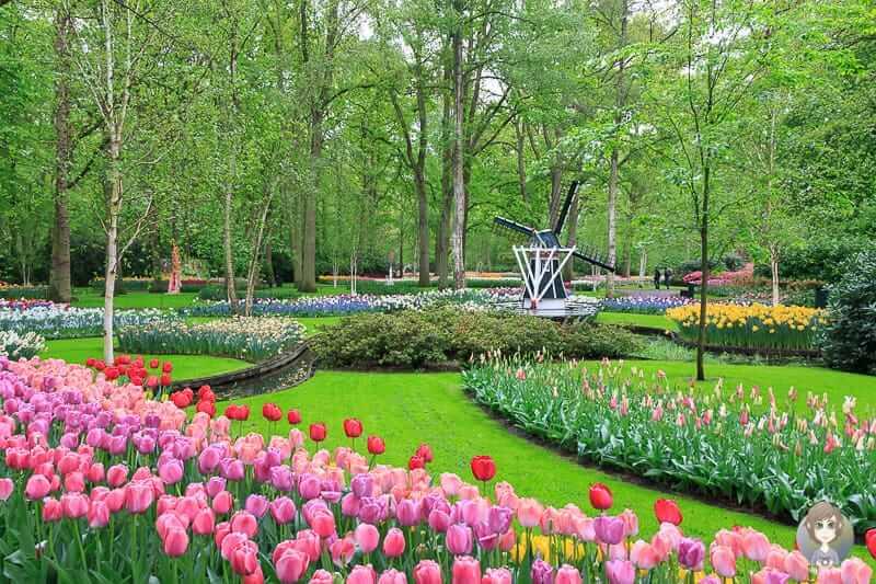 Eine kleine Windmühle und Blumen soweit das Auge reicht im Keukenhof Niederlande
