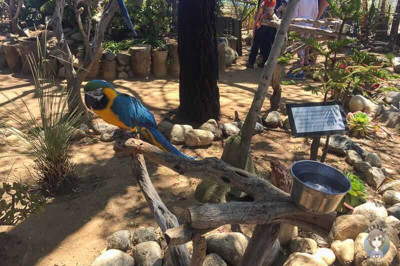 Papageien Del Mar