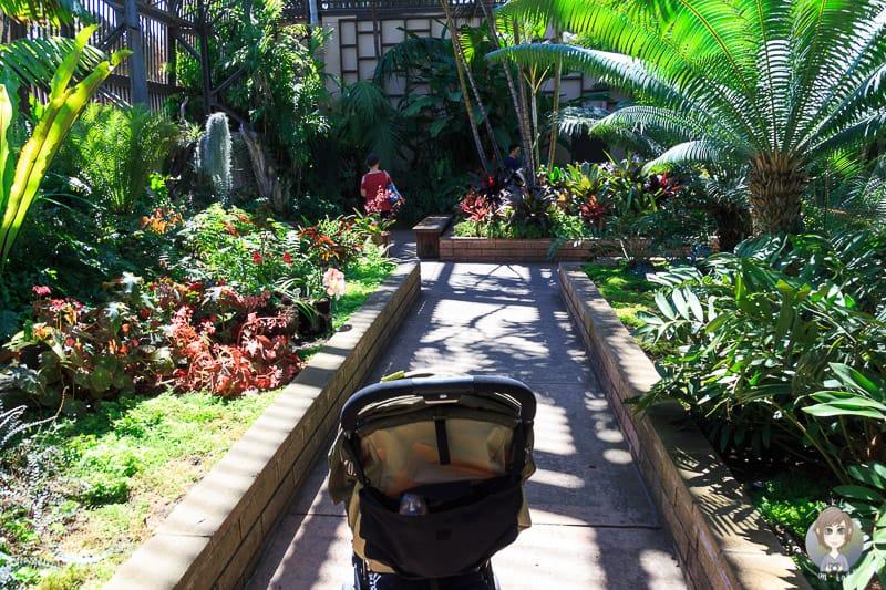Pflanzen botanischer Garten Balboa Park