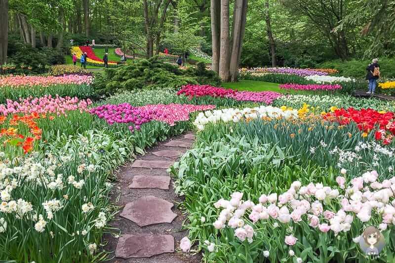 Tulpen in Holland im Keukenhof