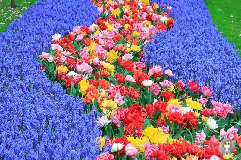 buntes Blumenbeet im Keukenhof