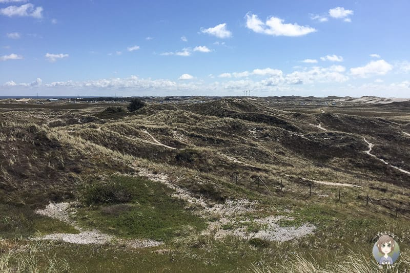 Die Aussicht auf die Dünen vom Lyngvig Fyr