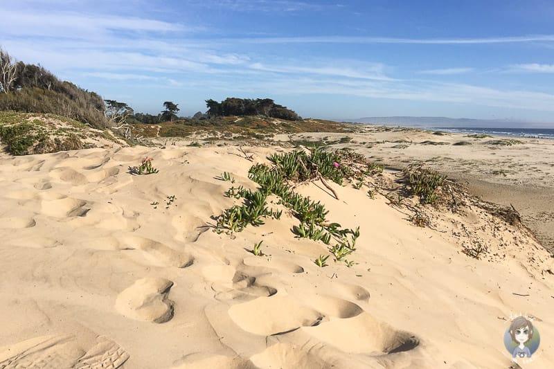 Der Pismo Beach