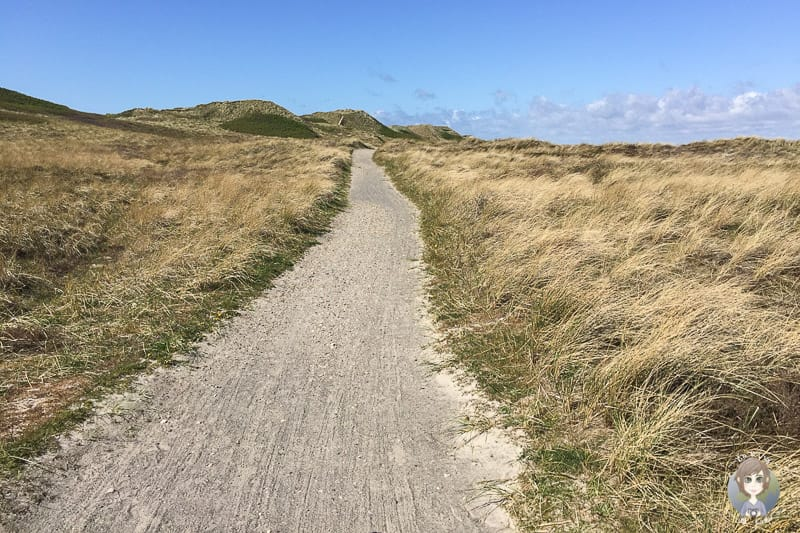 Rückweg auf dem Nordseeküstenradweg Dänemark
