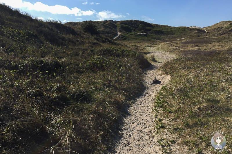 Der Weg zum Strand in Sondervig