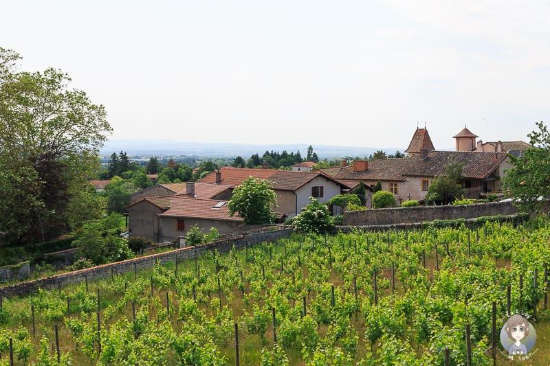 Ausblick von Saint Haon le Chatel