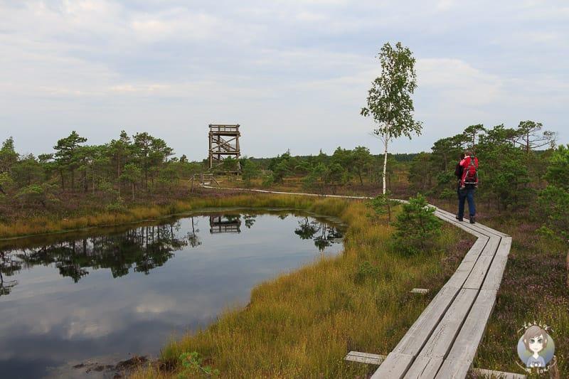 Wanderung durch das Kemeri Hochmoor auf der Baltikum Rundreise