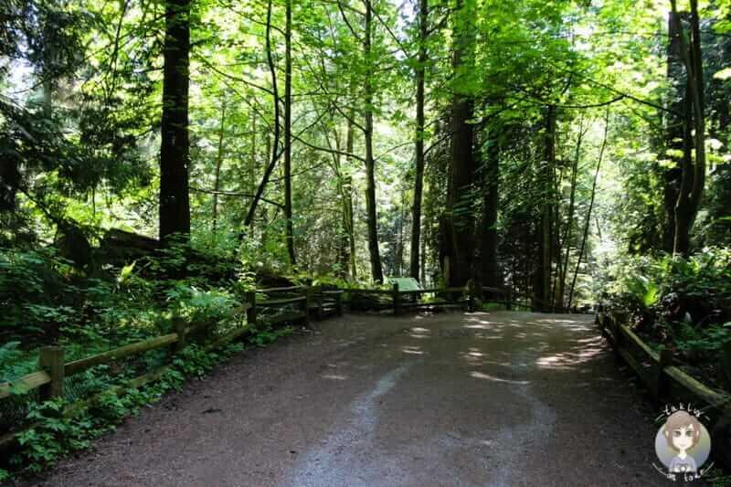 Waldweg im Lighthouse Park Vancouver
