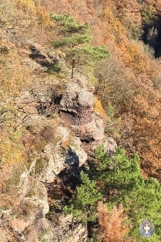 Buntsandsteinfelsen in Nideggen beim Wandern