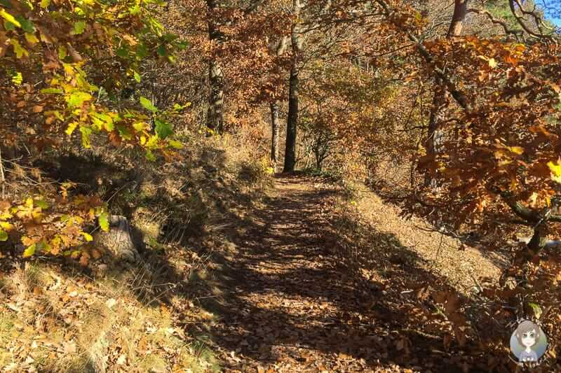 Wanderung über den Felsenrundweg in Nideggen
